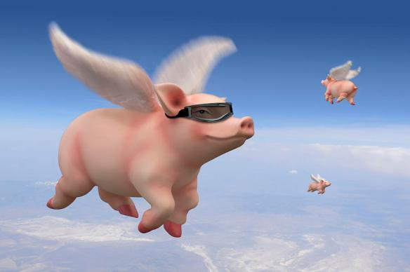pigs-fly
