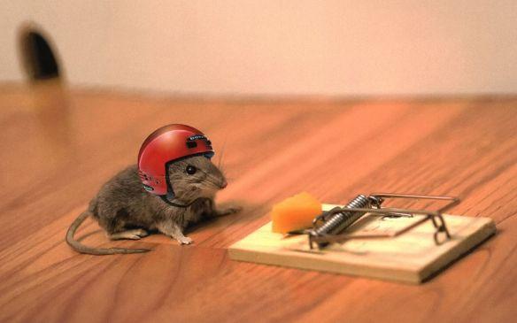 mouse-trap-helmet